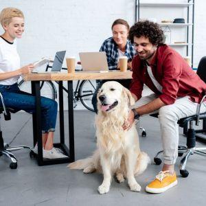 Artikelbild von Ein Hund im Büro? Die Vor- und Nachteile von Bürohunden
